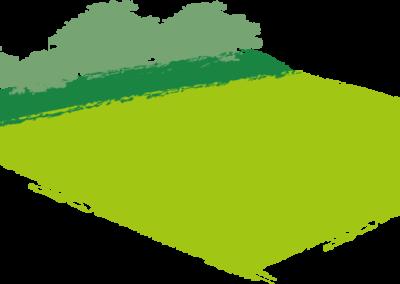 Artenreicher Grünlandstreifen