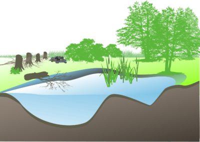 Pflege von Kleingewässern