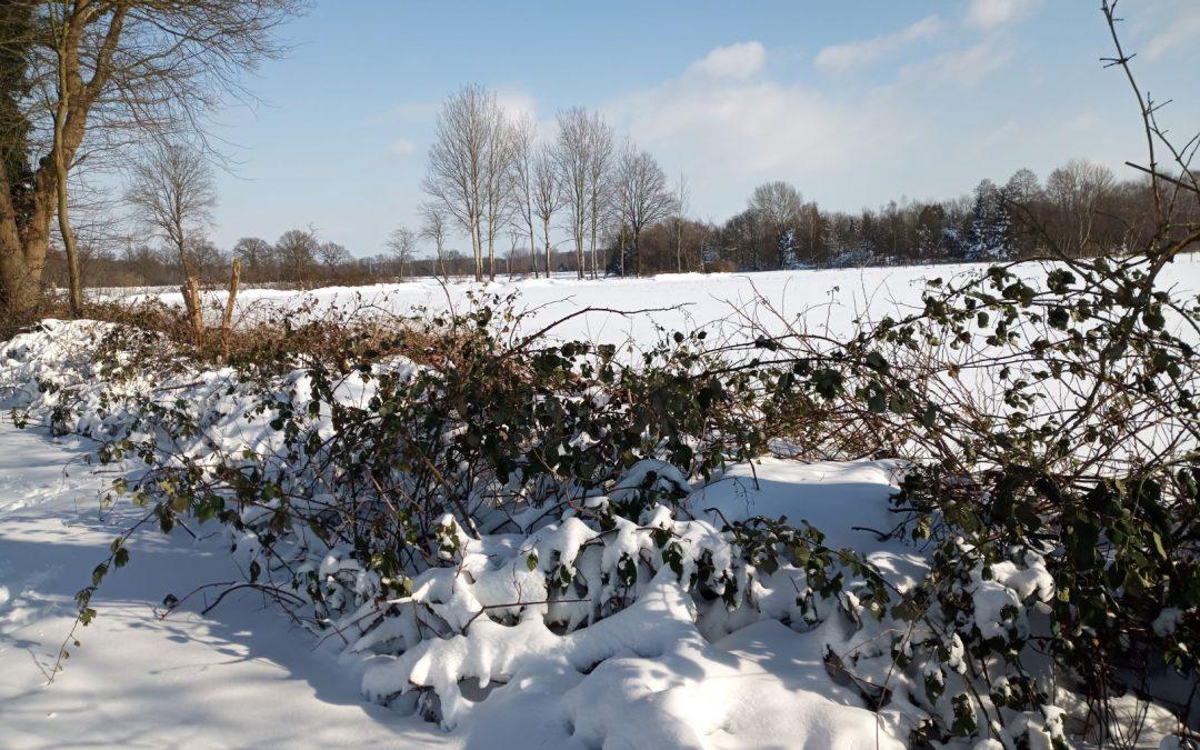Schutz vor Schnee und Prädation